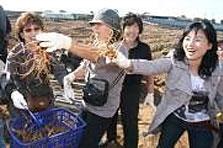 안성 인삼 수확행사 이미지입니다.